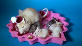 A mamã é um rato bege no chapéu de Santa e suas crianças pretas e bege pequenas comem o queijo que senta-se em uma placa cor-de-r video estoque