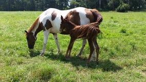Mamã e bebê Fotografia de Stock Royalty Free