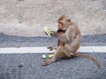 Mamã e bebê do macaco Imagens de Stock