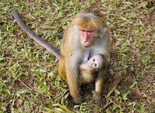 Mamã e bebê do macaco fotografia de stock