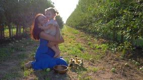 A mamã e a filha cultivando, novas estão alimentando a galinha pequena no jardim da maçã no outono durante a colheita vídeos de arquivo
