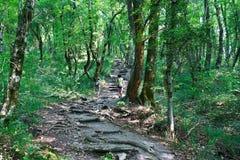 A mamã e o filho são contratados no turismo na fuga na floresta obscuro Fotos de Stock Royalty Free