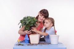 A mamã mostra a filha do potenciômetro de flor da transplantação em outra foto de stock