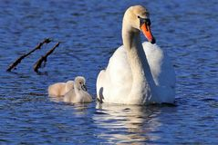 Mamã que mostra a seus bebês o modo de vida imagens de stock