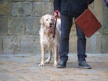 Mamífero do cão com ser humano Fotos de Stock Royalty Free