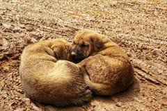 mamífero incerto da lama do amor bonito dos cachorrinhos fotos de stock