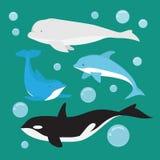 Mamífero Marine Life ilustração do vetor