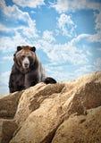 Mamífero selvagem do urso no penhasco com nuvens foto de stock royalty free