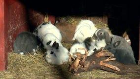 Mamíferos conejo, familia de lagomorfos almacen de metraje de vídeo