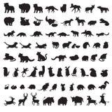 Mamíferos del mundo Sistema grande adicional de siluetas del gris de los animales Imagenes de archivo
