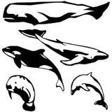 Mamíferos marinhos ilustração do vetor