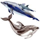 Mamíferos salvajes del delfín en un estilo de la acuarela aislados libre illustration