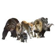 Mamíferos selvagens ilustração royalty free
