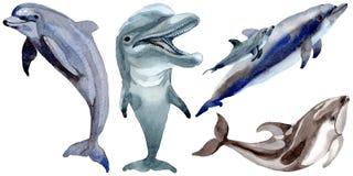 Mamíferos selvagens do golfinho em um estilo da aquarela isolados ilustração stock