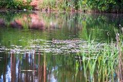 mam? del pato con la nataci?n de los anadones en el lago en la formaci?n fotos de archivo libres de regalías