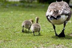 Mamã e bebês Foto de Stock
