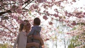 Mam? joven de la madre que detiene a su peque?o ni?o del muchacho del hijo del beb? debajo de los ?rboles florecientes de SAKURA  almacen de video