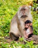 Mam3a y bebé del Macaque Fotos de archivo