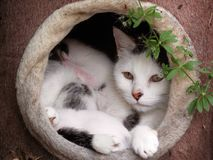 Mama Cat and Babies Stock Photography
