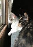 Mama Cat and Kitten Stock Photos