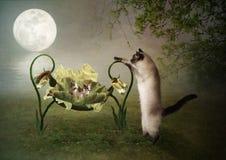 Mama cat lulls kittens Stock Photo