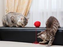 Mama cat watching kitten. Royalty Free Stock Photography