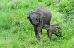 Mama en me Aziatische olifant Royalty-vrije Stock Fotografie