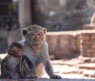 Mama i dzieciak łasowanie makaka małpa przy Phra rozwalamy Sam Tajlandia, Yot trzy święty rozwala w Lopburi prowincji obrazy royalty free