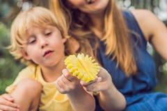 Mama i syn pinkin w parku Je zdrowe owoc mango, ananas i melon -, Dzieci jedzą zdrowego jedzenie zdjęcie stock