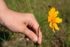 mama kwiat Fotografia Royalty Free