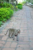Mama Monkey Stock Images