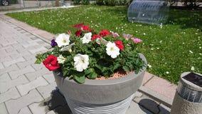 Mama ogród Zdjęcie Stock