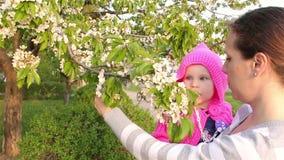 Mama trzyma troszkę dziewczyny w ona ręki i pokazywać wiśni kwitnie zdjęcie wideo