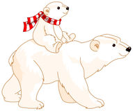 Mama y bebé del oso polar Imagen de archivo libre de regalías
