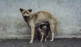 Mama y niño Foto de archivo libre de regalías