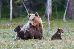Mamabär und ihre drei kleinen Welpen Lizenzfreie Stockfotografie