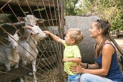 Maman avec l'enfant à la cage avec des enfants à la ferme d'élevage Photographie stock libre de droits