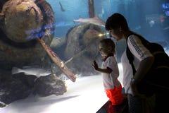 Maman avec le fils étudiant l'espèce marine Image stock