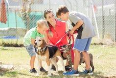 Maman avec ses chiens de marche de fils d'un refuge pour animaux images stock
