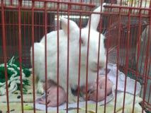 maman dans la cage image libre de droits
