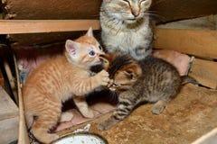 Maman de chat et petit chaton jouant dans le nid Photos libres de droits