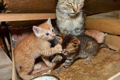 Maman de chat et petit chaton jouant dans le nid Image stock