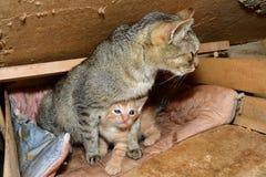 Maman de chat et petit chaton jouant dans le nid Photographie stock libre de droits