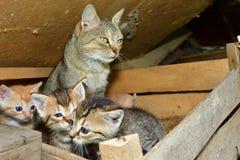 Maman de chat et petit chaton jouant dans le nid Image libre de droits