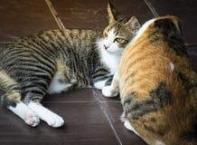 Maman de chat prenant soin d'un chaton dans la maison de l'amour Photographie stock libre de droits