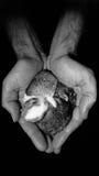 Maman de coeur de lapin photos stock