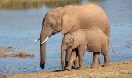 Maman et chéri d'éléphant africain Image libre de droits