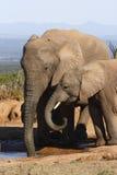 Maman et descendant d'éléphant Images stock
