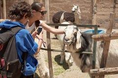 Maman et fils agissant l'un sur l'autre avec des animaux dans le ZOO Photographie stock libre de droits