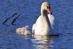Maman montrant à ses bébés le mode de vie images stock